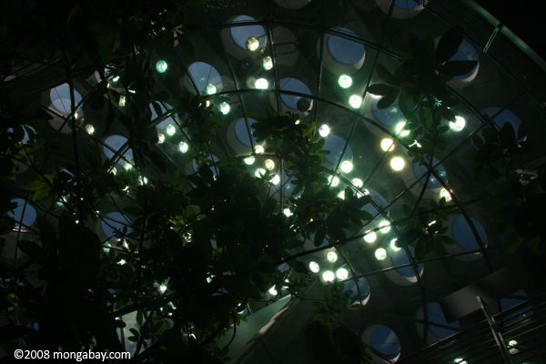 Ceiling of the new CA Academy of Sciences
