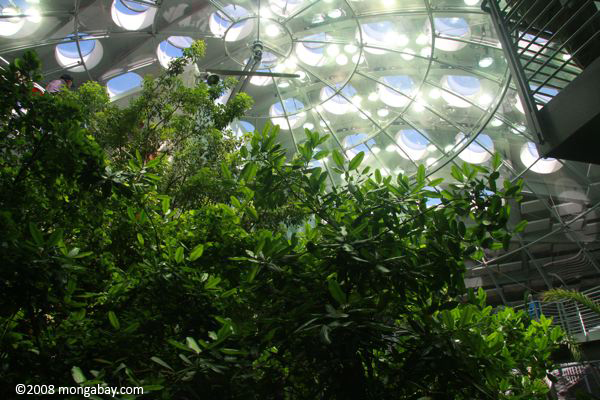 4-story rainforest in the new CA Academy of Sciences in San Francisco