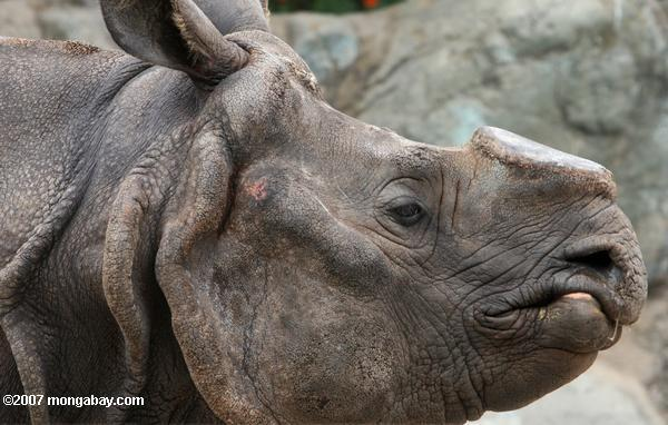 World Rhino Day: Sunday, September 22nd