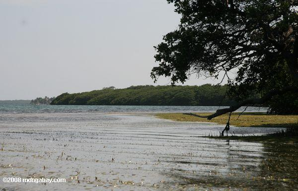 Sea grass, mangroves, and ocean of Turneffe Atoll
