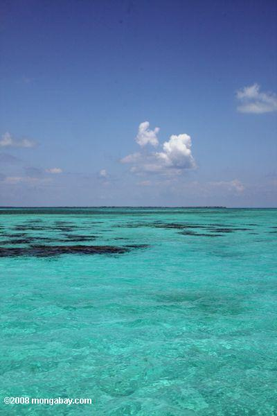 Turquoise waters of Lighthouse Reef