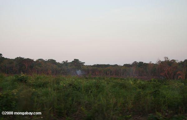 Slash-and-burn forest clearing in Belize