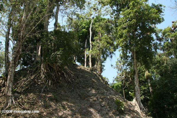 What Tikal looked like before excavation