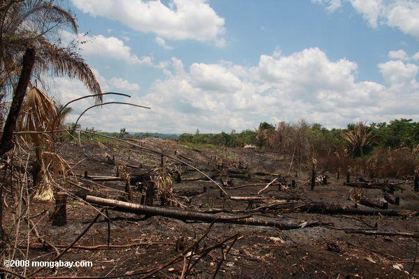 Slash-and-burn agriculture in Belize. Photo by: Rhett A. Butler.