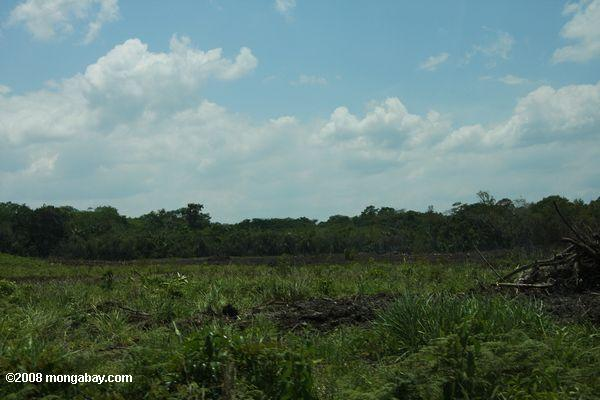 Cleared forest land in Belize