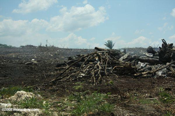A stack of burning trees in a deforested landscape