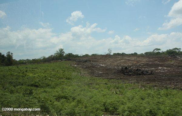 Forest cleared for pasture