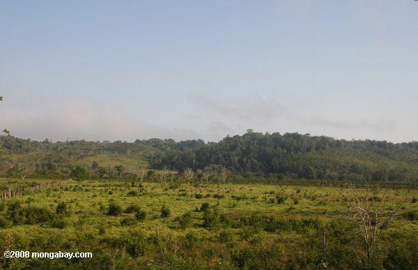 Deforested landscape in Guatemala