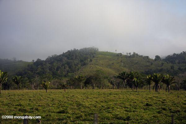 Deforestation for cattle pasture in Guatemala