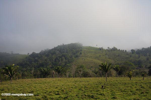 Forest converted for cattle pasture in Guatemala