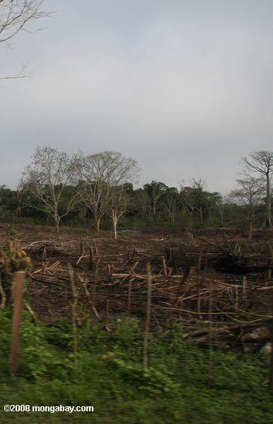 Slash-and-burn agriculture in Guatemala