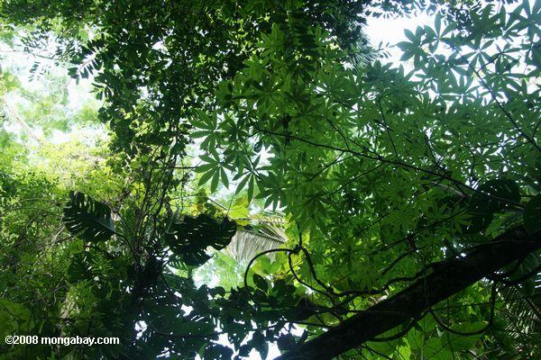 Leaves of the rainforest understory