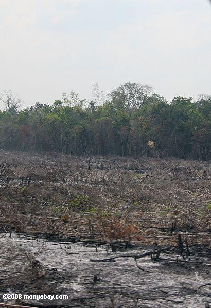 Deforestation in Guatemala