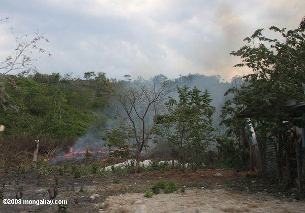 Burning agricultural land in Guatemala