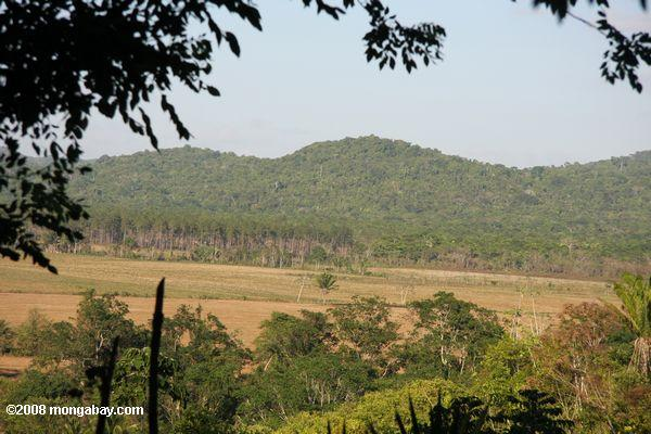 Forest land cleared three years previously for pasture