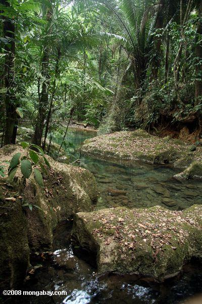 Clearwater creek just outside the entrance to Actun Tunichil Muknal cave