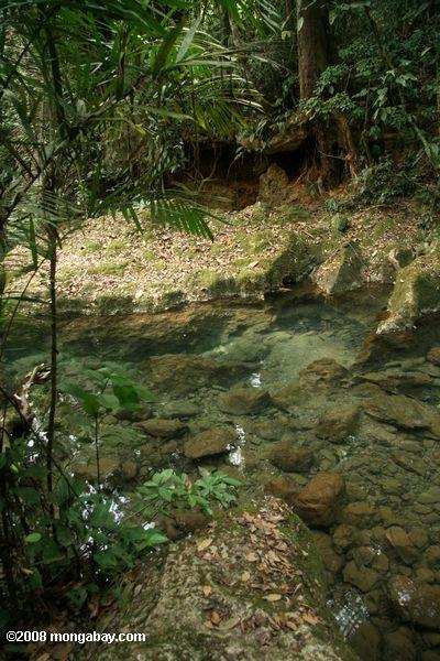 Creek flowing from Actun Tunichil Muknal cave