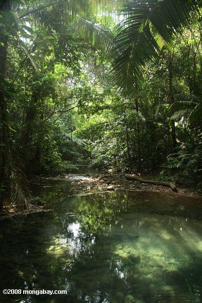 Rainforest pool