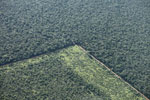 Pasture and legal forest reserve near the Arc of Deforestation in the Brazilian Amazon