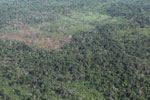 Legal forest reserve that has been burned and logged by squatters