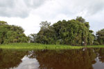 Small slow-moving river in the Pantanal
