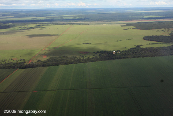 Soy field in the Brazilian Amazon. Again this year, Brazil has the highest number of murders of environmental and land defenders. Photo by: Rhett A. Butler.