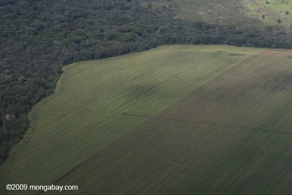 Soy fields meet the Amazon rainforest. Proponents of industrial agriculture often argue that conventional production means less deforestation due to higher yields. Photo by: Rhett A. Butler.