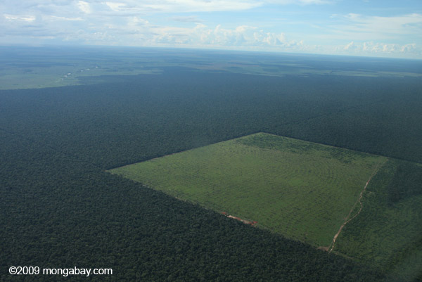 Legal forest reserve and cattle pasture in the Brazilian Amazo