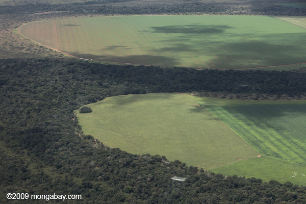 Soy fields cutting into the Amazon rainforest. Photo by: Rhett A. Butler.