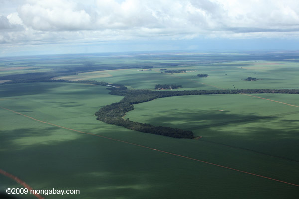 Soy and forest fragments: the new landscape of the southern Amazon [brazil_0298]