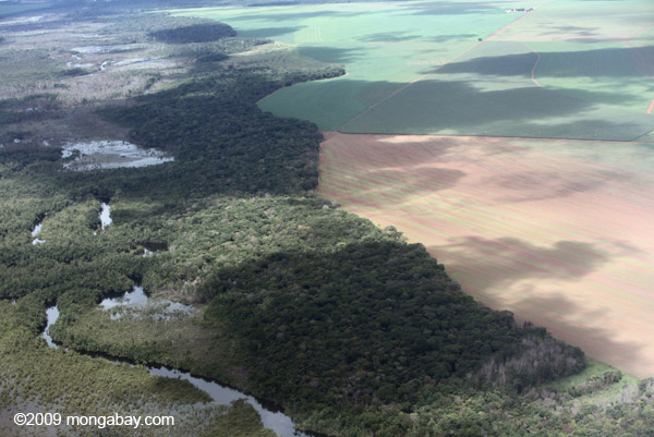 Soy and forest in the Amazon