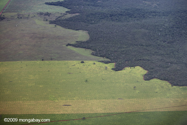 The Amazon rainforest meets cleared area for cattle pasture. A radical meteorology theory argues that loss of forest, both in temperate and tropical regions, will lead to less precipitation over land. Photo by: Rhett A. Butler.