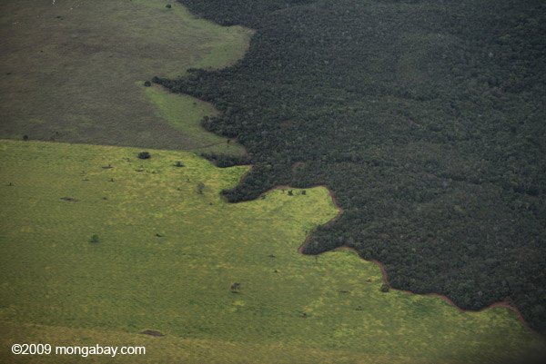 Amazon rainforest and cattle pasture
