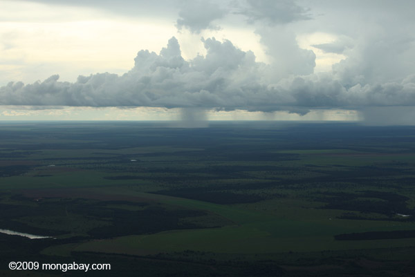the importance of tropical dry and rain forests forests in regions with high rainfall See tropical forest rainforests usually occur in regions regions where there is a high annual rainfall of tropical areas that have a long dry.
