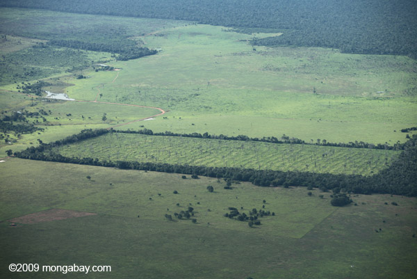 Final House vote on Brazil's Forest Code likely delayed