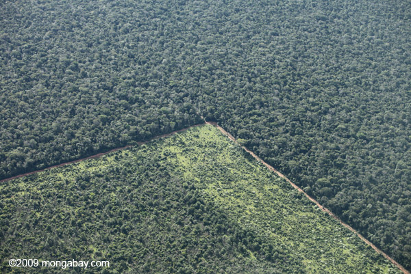 Recent deforestation in the Brazilian Amazon. Photo by: Rhett A. Butler.