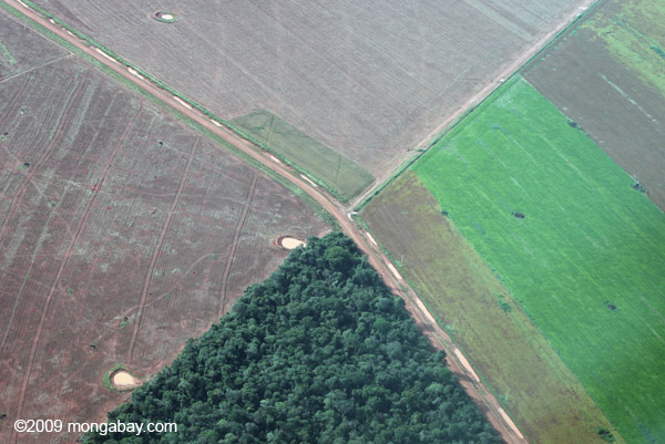 Deforestation in the Amazon for cattle pasture. Photo by: Rhett A. Butler.