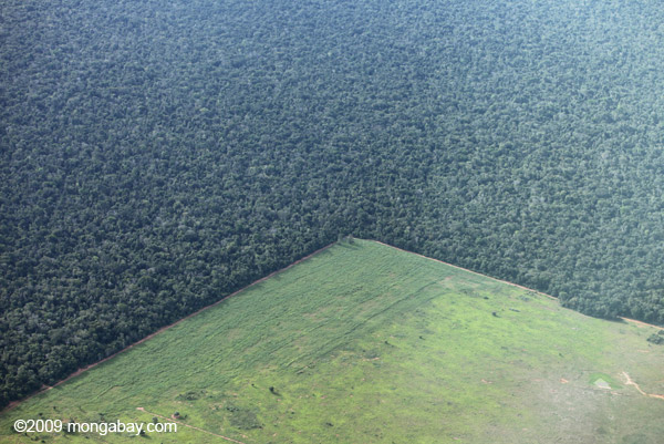 Cattle pasture and a forest reserve in Mato Grosso, Brazil