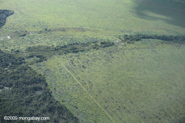 Cattle pasture and Amazon forest. Photo by: Rhett A. Butler.