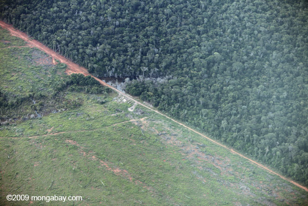 A sharp line separates the Amazon rainforest from cattle pasture in Brazil. The majority of deforestation in the Amazon has been for raising cattle. Photo by: Rhett A. Butler.