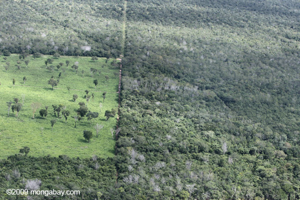 Pasture meets gallery forest in the Brazilian Amazon. Photo by: Rhett A. Butler.