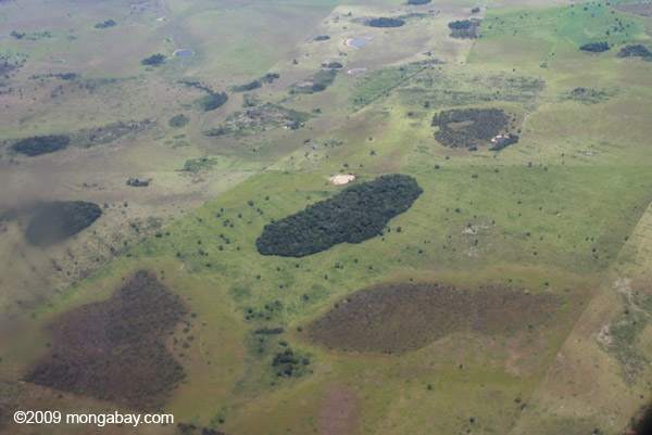 Patch of forest in Brazil surrounded by cattle pasture. Photo by: Rhett A. Butler.