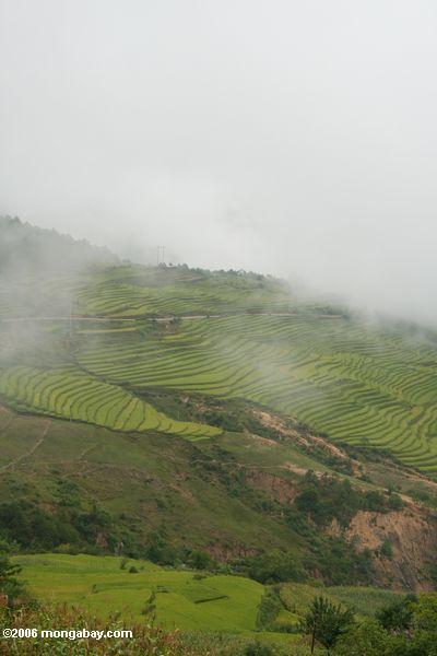 Terraces do arroz em Yunnan noroeste