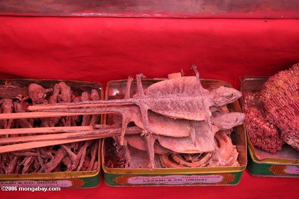 Lizard-on-a-stick in in Chinese market. Photo by: Rhett A. Butler.