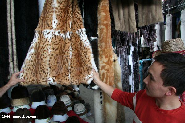 Wild cat furs on sale in market in China, 2006. Photo by: Rhett A. Butler.