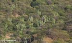 Dry forest and cactus in northern Colombia, near Taganga