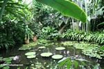 Water lily room at the Bogota Botanical Garden (Jardin Botanico)