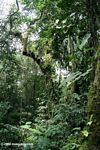 Colombian cloud forest of Santuario Otún Quimbaya