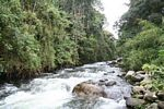 Otun river as it flows through a Colombian montane forest