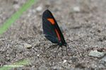 Red and black butterfly on a sandy river beach
